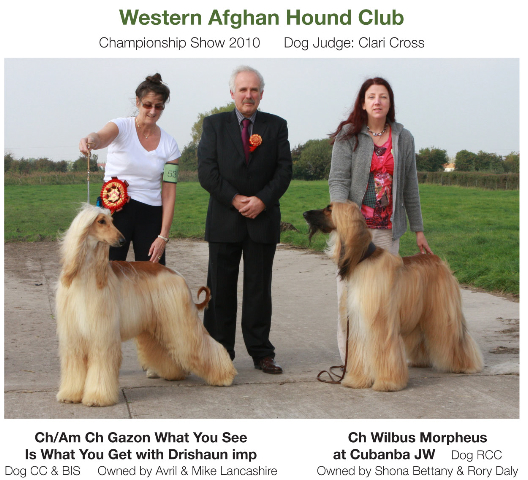 Afghan Hound Rescue Dogs Uk